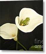 Pacific Tree Frog Metal Print by Sean Griffin