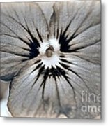 Viola Named Sorbet Blue Heaven Jump-up Metal Print by J McCombie