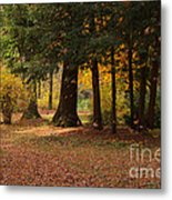 Autumn Metal Print by Angela Doelling AD DESIGN Photo and PhotoArt