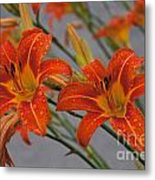 Day Lilly Metal Print by William Norton