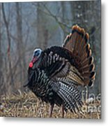 Jake Eastern Wild Turkey Metal Print by Linda Freshwaters Arndt
