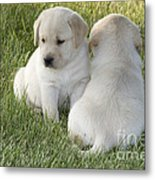 Yellow Labrador Puppy Metal Print by Linda Freshwaters Arndt