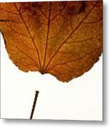 Leaf Metal Print by Bernard Jaubert