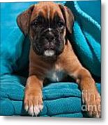 little Boxer dog puppy Metal Print by Doreen Zorn