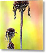 Wilted Flower  Metal Print by Toppart Sweden