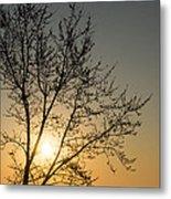 A Filigree Of Branches Framing The Sunrise Metal Print by Georgia Mizuleva