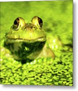 A Frogs Day Metal Print by Optical Playground By MP Ray