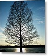 A Lonely Tree Metal Print by Lucy D