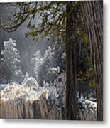 A North Woods Fairy Tale Metal Print by Mary Amerman