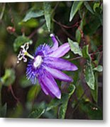 A Passion For Flowers Db Metal Print by Rich Franco