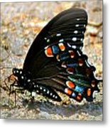 A Real Beauty Metal Print by Marty Koch