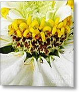 A Small Crown Of Glory Metal Print by Sarah Loft