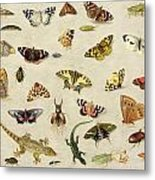A Study Of Insects Metal Print by Jan Van Kessel