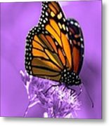 A Touch Of Summer  Metal Print by Cathy  Beharriell