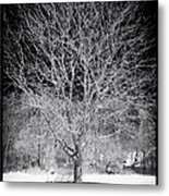 A Tree In The Snow Metal Print by John Rizzuto