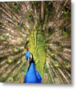 Abstract Peacock Digital Artwork Metal Print by Georgeta Blanaru