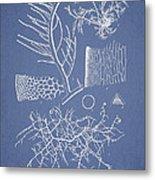 Algae Metal Print by Aged Pixel