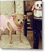 All Dressed Up Metal Print by Laurie Search