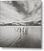 All Together Now Metal Print by Laurie Search