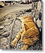 Alley Cat Siesta In Grunge Metal Print by Meirion Matthias