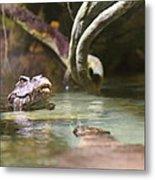 Alligator - National Aquarium In Baltimore Md - 12121 Metal Print by DC Photographer