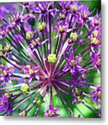 Allium Series - Close Up Metal Print by Moon Stumpp