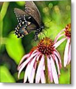 Amazing Butterfly Metal Print by Marty Koch