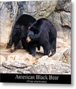 American Black Bear  Metal Print by Chris Flees