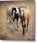 American Quarter Horse Herd Metal Print by Betty LaRue