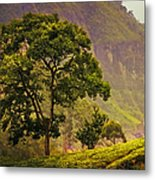 Among The Mountains And Tea Plantations. Nuwara Eliya. Sri Lanka Metal Print by Jenny Rainbow