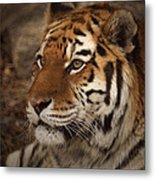 Amur Tiger 2 Metal Print by Ernie Echols