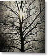 Ancient Tree Metal Print by Terry Rowe