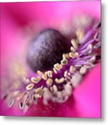 Anemone Metal Print by Mark Johnson