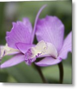 Angels Treasure Hawaii Orchid Metal Print by Sharon Mau