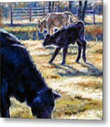 Angus Calves Out With Dad Metal Print by Denise Horne-Kaplan