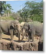 Animal Park - Busch Gardens Tampa - 01131 Metal Print by DC Photographer