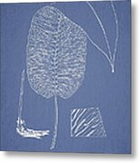 Anisogonium Cordifolium Metal Print by Aged Pixel