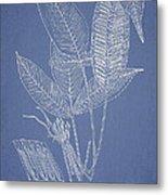 Anisogonium Lineolatum Metal Print by Aged Pixel