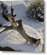 Antler Metal Print by Heather L Wright