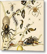 Ants Spiders Tarantula And Hummingbird Metal Print by Getty Research Institute