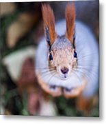 Anyting To Bite - Featured 3 Metal Print by Alexander Senin