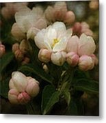 Apple Blossom Time Metal Print by Mary Machare