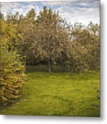 Apple Orchard Metal Print by Amanda And Christopher Elwell