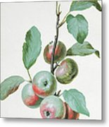 Apples Metal Print by Pierre Joseph Redoute