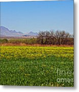 Arizona Spring Metal Print by Methune Hively