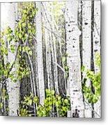 Aspen Grove Metal Print by Elena Elisseeva