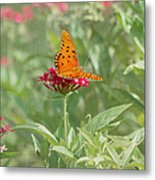 At Rest - Gulf Fritillary Butterfly Metal Print by Kim Hojnacki