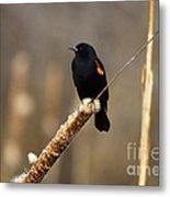 At Rest Metal Print by Mike  Dawson