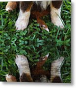 Aussie Double Trouble Metal Print by Kenny Francis