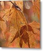 Autumn Acer Metal Print by Anne Gilbert